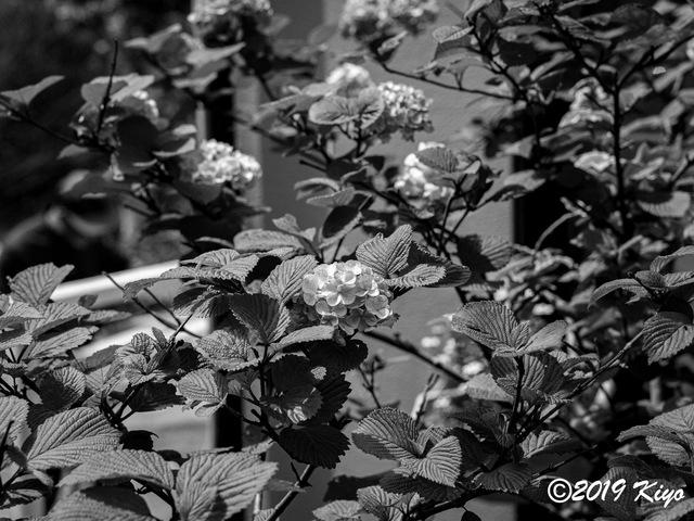 E4135677_CameraRAW_2048_signed.jpg