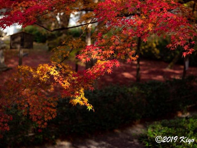 EB300722_CameraRAW_2048_signed.jpg